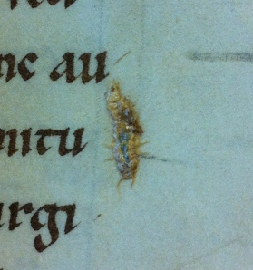 The Golden Bookworm.