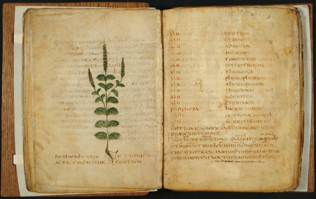 Leiden, Universiteitsbibliotheek, VLQ MS 9 (Italy, 550-600)