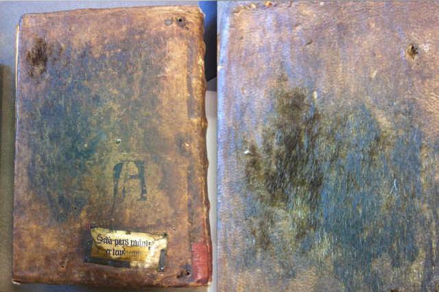 Bruges City Library, Ms. 19, back cover and close-up of a hairy patch. Photo Jenneka Janzen.